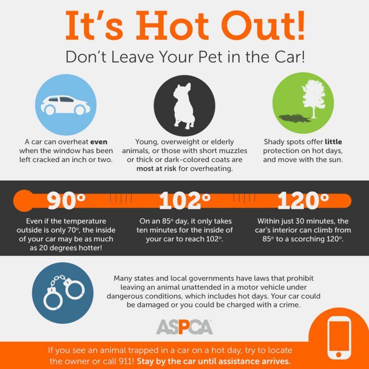 Cool Tips for Pet Summer Safety