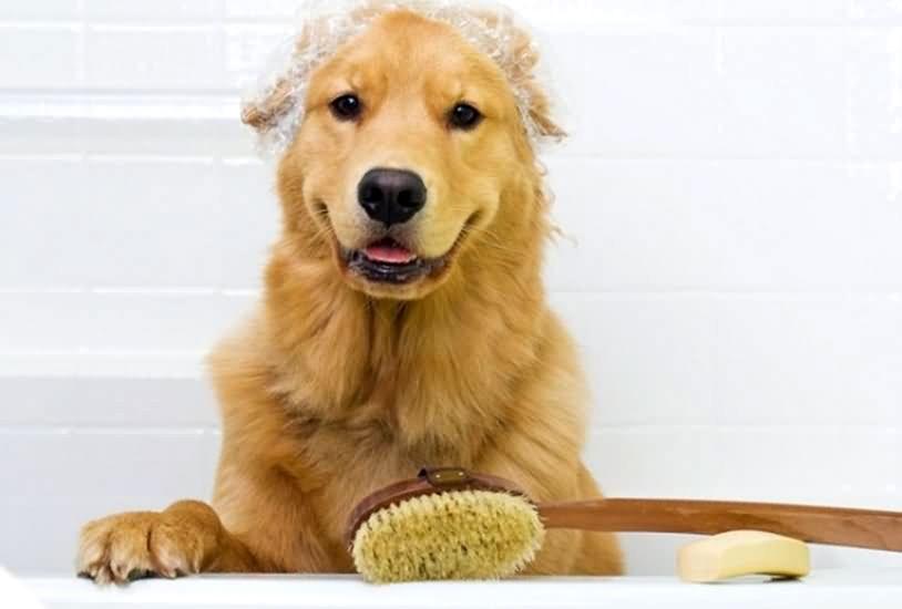 Dog Grooming Laguna Beach