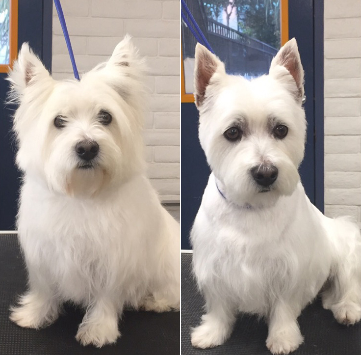 grooming before and after   pet suites