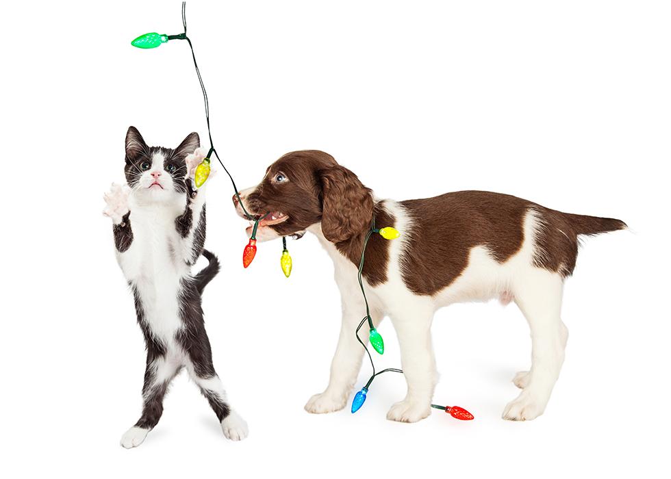 Dog Blog - Pet Suites